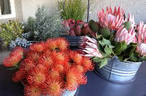 Proteas on a flower cart outside Cape Grace, South Africa