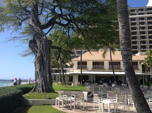 A tree, a plantation house (with high-rise behind), public walkway to the left - this is Halekulani