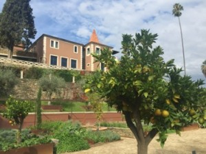 From the highly-fruitful organic garden, look up at the main building