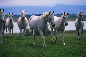 Luxury hotels and travel - At The Selman Marrakech equine guests will be in horse heaven