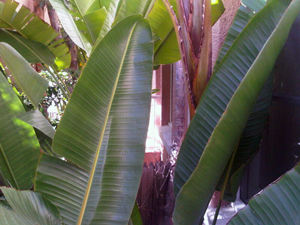 Palm fronds on the balcony of room 106, Beverly Hills Hotel
