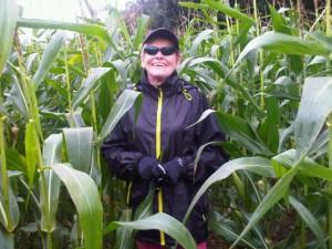 Walking in the rain through growing corn in 'Mrs Fox Field'
