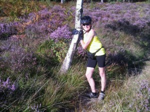 In a forest of heather