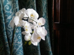 White orchids on the dining table