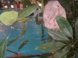 Luxury hotel - Monte Carlo Bay's amazing 150-yard indoor-outdoor pool