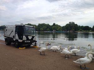 Real birds, Hyde Park