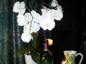 Luxury hotels and travel - An orchid is part of the family