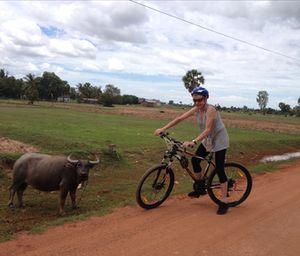 Bike and buffalo