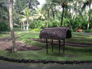 Across from villa 14 - a vegetable garden