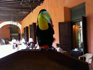 Matthieu the Sofitel Santa Clara toucan