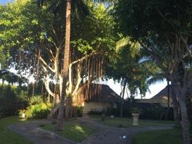 A villa is dwarfed by a banyan tree