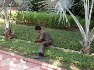 Cutting unwanted greenery