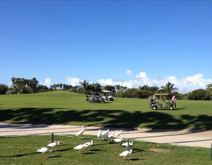 More birds, surveying the golf course