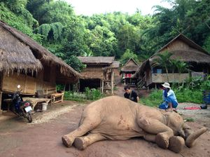 Elephant with mahout, mahout village