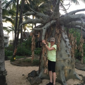 A recycled baobab tree