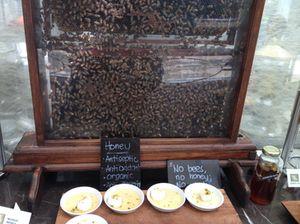 Live bees, in Spectrum