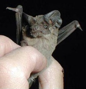 One bat shows its stuff