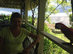 Mr Parrot senses FOOD….