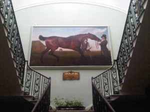 .. to see Northern Ireland's most famous racehorse, Hiburnian, painted life-size by Stubbs.