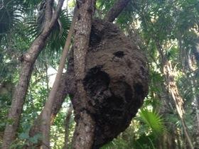 Seen on the jungle walk