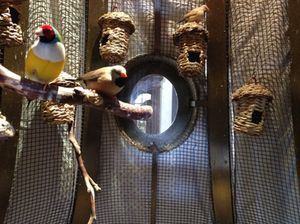 Songbirds, completely at home in the lobby of…