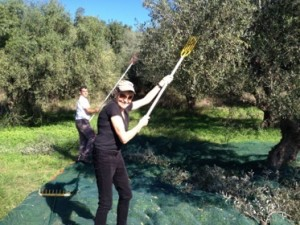 A new fitness activity, bashing olive trees with a long paddle