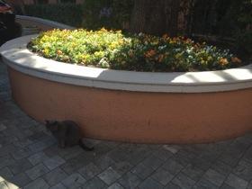 Duncan, the resident cat
