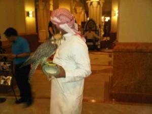 Local with falcon, Souk Al Bahar