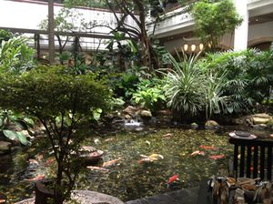 The koi pond runs at 100 percent occupancy