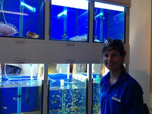 Some of the fish tanks, monitored 24/7