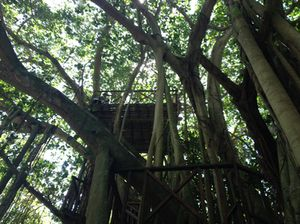 Lunch up in this treehouse