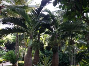 .. and palms…
