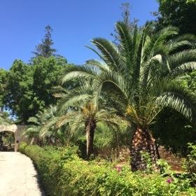 St Anton's Gardens