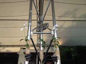 Orchids adorn wires holding up a terrace canopy…
