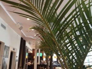 Palms in the lobby...