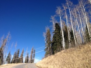 The slopes are alive with the sight of aspen and pine