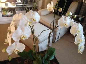 Suite 12-A, typically, is awash with orchids