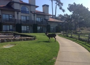 Deer temporarily block a path