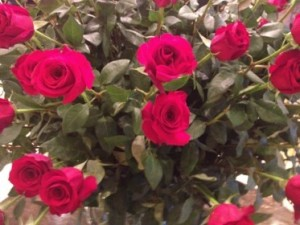Roses in the lobby of Swissôtel Quito