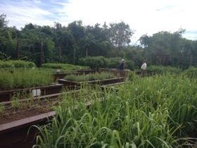 The new Mayan garden