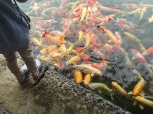 Are these koi real?