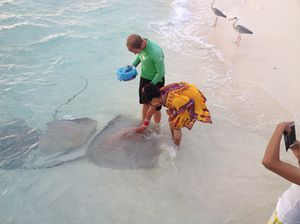 Helping the pro feed tuna to enormous stingray