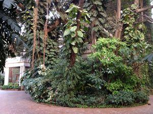 Waking through the Nairs' garden to their bungalow