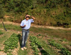 Arun Achappa in his organic strawberry garden