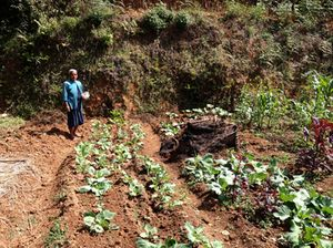 A local farmer plants seeds between existing produce