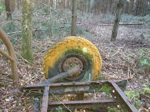 Mould on an ancient tyre in an English wood