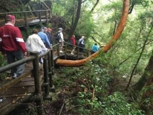 Hiking through lush rainforest